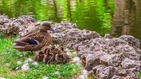 ouderschap Royalty-vrije Stock Fotografie