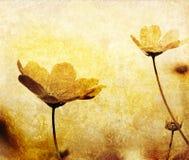 Ouderwetse bloem Stock Foto's
