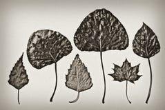 Ouderwetse herbariumachtergrond Royalty-vrije Stock Fotografie