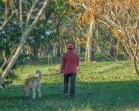Oudste die zijn hond voor een gang in het park in de ochtend nemen stock foto's