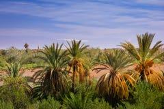 Oued Tifoultoute. Ouarzazate. Morocco. Stock Image