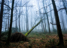 Oughaval Woods Royalty Free Stock Images