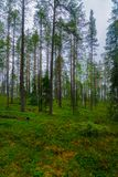 Oulanka National Park, Finland. View of trees and forest in Oulanka National Park, Finland royalty free stock photo