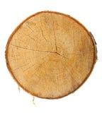 övre treesikt för stubbe Arkivbild