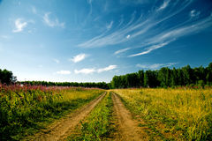 Сountry road. Forest road sunny summer day Stock Photography