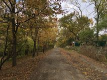 Сountryside street, road. Trees, early autumn forest. Сountryside street, road. Trees, Vladivostok early autumn forest Stock Image
