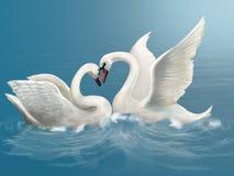 Сouple white swan Royalty Free Stock Image