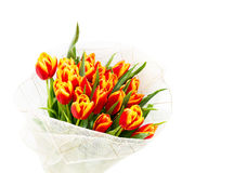 Вouquet of orange tulips. On a white background Stock Images