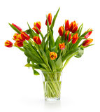 Вouquet of orange tulips. On a white background Royalty Free Stock Photo