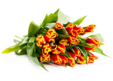 Вouquet of orange tulips. On a white background Stock Photos