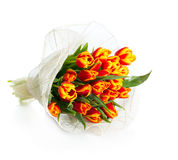 Вouquet of orange tulips. On a white background Royalty Free Stock Images