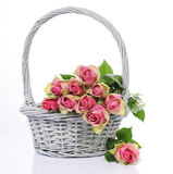 Ouquet of pink roses Royalty Free Stock Image