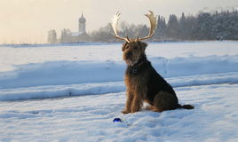 Our Airedale Terrier - Collage as  Christmas dog Stock Image