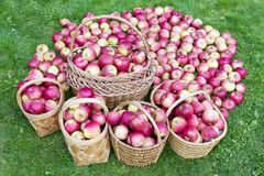 Our apples for you Stock Photography