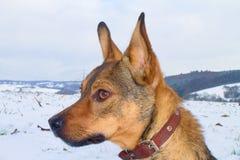 Dog. Our beloved dog Stock Photos