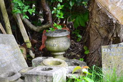 """Our Billy. Sepulchral stone vase with the inscription """"Our Billy&#x22 Royalty Free Stock Images"""
