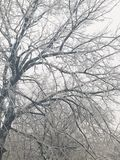 Our first ice storm of 2017. Ice on a tree from our first ice storm in 2017 Stock Photos