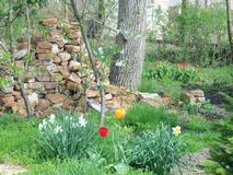 Our garden in April 2011 royalty free stock image
