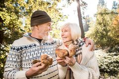 Happy delighted couple collecting mushrooms in the forest stock photography