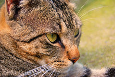 Our pets. Closeup photography with our beloved pets,cats and dogs Royalty Free Stock Photos