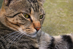 Our pets. Closeup photography with our beloved pets,cats and dogs Royalty Free Stock Image
