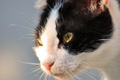 Our pets. Closeup photography with our beloved pets,cats and dogs Stock Images