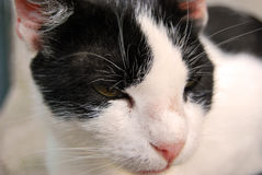 Our pets. Closeup photography with our beloved pets,cats and dogs Stock Image