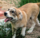Our pets. Closeup photography with our beloved pets,cats and dogs Stock Photo