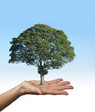 Our Trees are the Lungs of Our Earth Stock Image