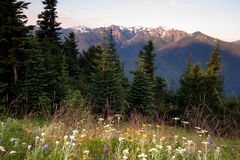 Ouragan alpin Ridge Olympic Mountains de Wildflowers de pré Image stock