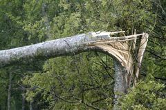 Ouragan cassé d'arbre Images libres de droits
