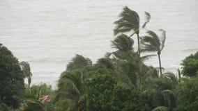 Ouragan de Pabuk, bord de mer d'océan, Thaïlande Catastrophe naturelle, ouragan d'eyewall Paume extrême forte de balancements de  banque de vidéos