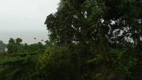 Ouragan de Pabuk, bord de mer d'océan, Thaïlande Catastrophe naturelle, ouragan d'eyewall Paume extrême forte de balancements de  clips vidéos