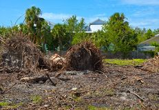 Ouragan Irma Cleanup Images stock