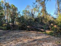 Ouragan Michael photos libres de droits