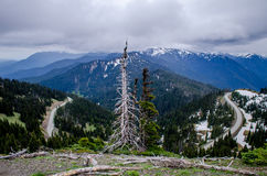 Ouragan Ridge Road, parc national olympique Photographie stock
