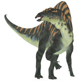 Ouranosaurus Herbivore Dinosaur. Ouranosaurus was a herbivorous hadrosaur dinosaur that lived during the Cretaceous Period of Africa Stock Image
