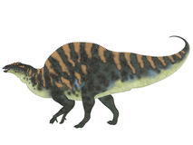 Ouranosaurus Side Profile. Ouranosaurus was a herbivorous hadrosaur dinosaur that lived during the Cretaceous Period of Africa Royalty Free Stock Photos