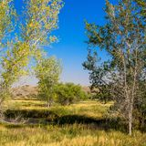 Trees and prairie grasses in autumn in Ouray National Wildlife Refuge royalty free stock photos