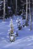 Ourdoor Christmas Tree. A lit Christmas tree at the edge of a forest on a snowy hillside at dusk Stock Photos