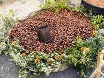 Ouriço das castanhas Imagem de Stock Royalty Free