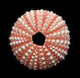 Ouriço-do-mar de mar Imagens de Stock