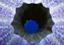 Ouriço-do-mar de mar Fotografia de Stock Royalty Free
