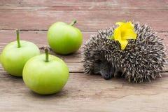 Ouriço pequeno do sono com flor e maçãs Imagem de Stock Royalty Free