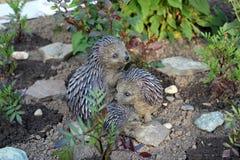 Ouriços cerâmicos no jardim do verão Imagens de Stock Royalty Free