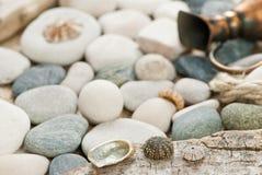 Ouriços-do-mar Imagens de Stock