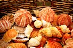 Ouriços-do-mar e shell Imagem de Stock