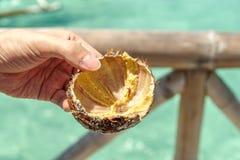 Ouriços-do-mar na mão Imagem de Stock Royalty Free