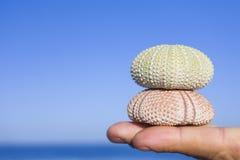 Ouriços-do-mar nos dedos Fotografia de Stock Royalty Free