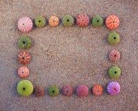 Ouriços-do-mar que formating o quadro vazio na areia molhada Foto de Stock Royalty Free